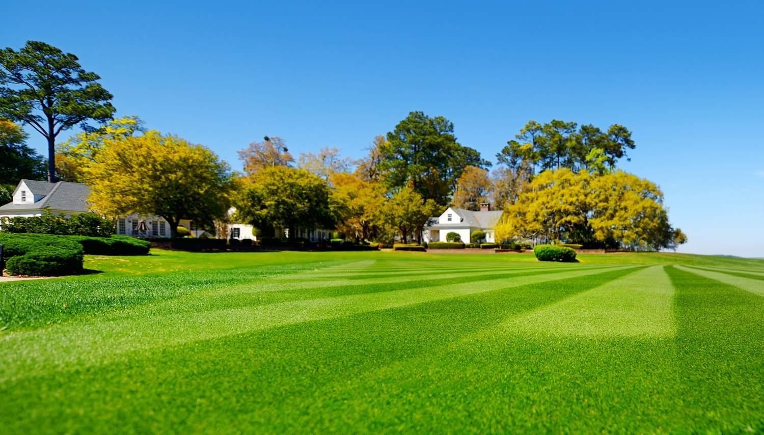 Affordable Lawn Care Services